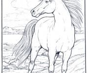 Coloriage dessin  Cheval 12