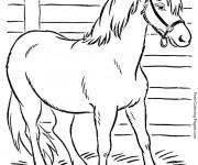Coloriage Cheval américain