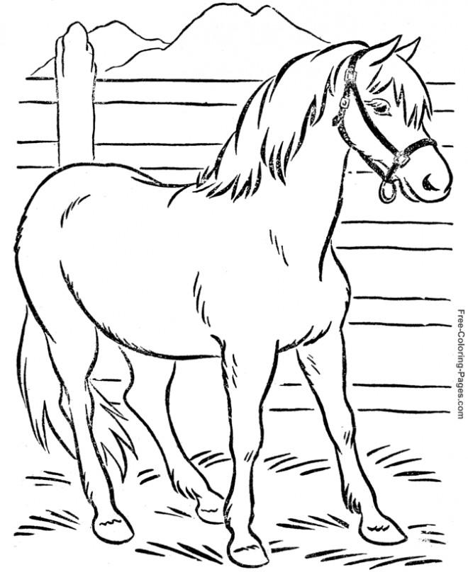 Coloriage et dessins gratuits Cheval américain à imprimer