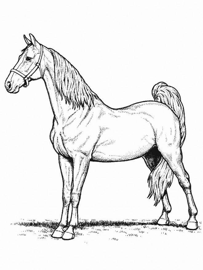 Coloriage cheval de selle fran ais dessin gratuit imprimer - Cheval a imprimer noir et blanc ...