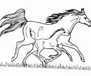 Coloriage Cheval et poulain au galop