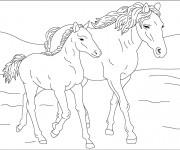 Coloriage et dessins gratuit Cheval et son poulain à imprimer