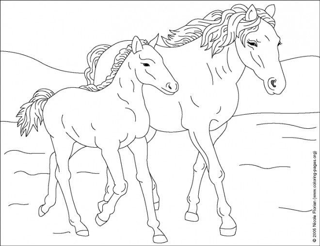 Fresh coloriage cheval sauvage charmant coloriage cheval sauvage dessin coloriage 2019 - Chevaux a colorier ...