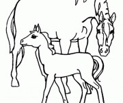 Coloriage Cheval soigne son poulain