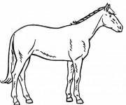 Coloriage Cheval vue de gauche