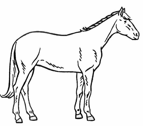 Coloriage et dessins gratuits Cheval vue de gauche à imprimer