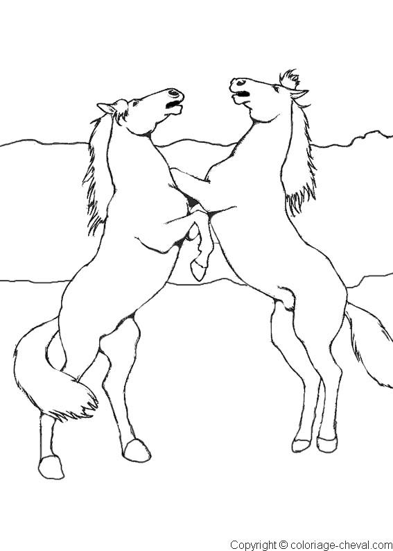 Coloriage chevaux cabr s maternelle dessin gratuit imprimer - Dessin de poulain a imprimer ...