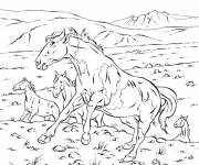 Coloriage Chevaux sauvages
