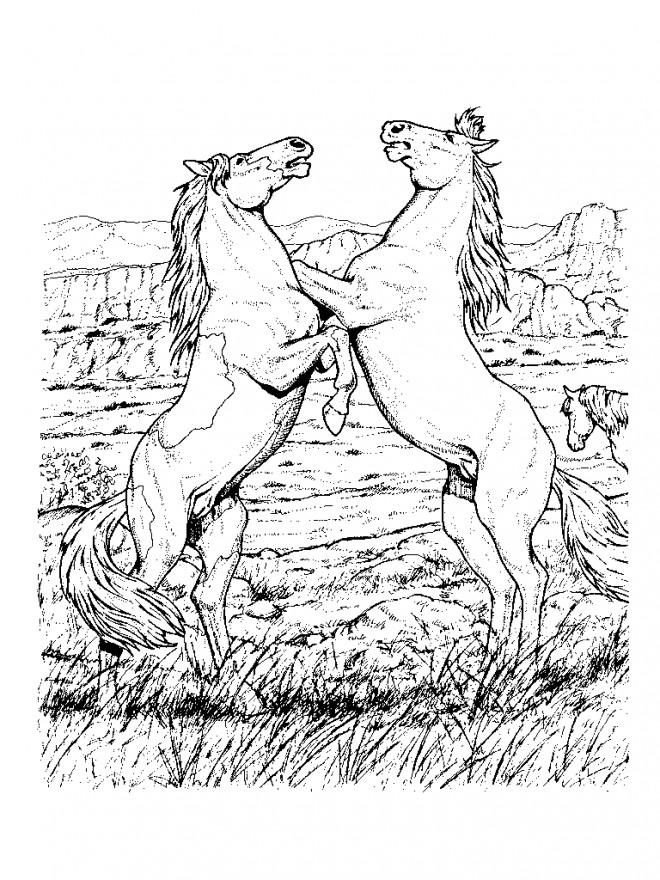 Coloriage et dessins gratuits Dessin au crayon de deux chevaux à imprimer
