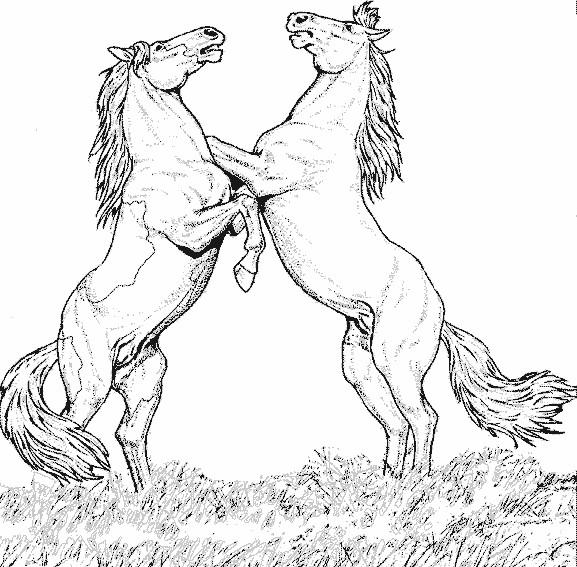 Coloriage jolie chevaux qui se cabrent dessin gratuit - Coloriage cheval sauvage ...