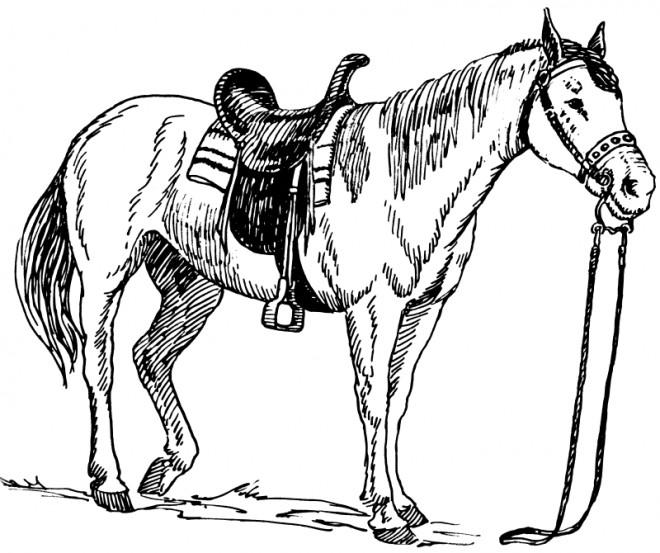 Coloriage la selle de cheval dessin gratuit imprimer - Dessin de cheval magnifique ...