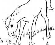 Coloriage Le cheval  et le canard