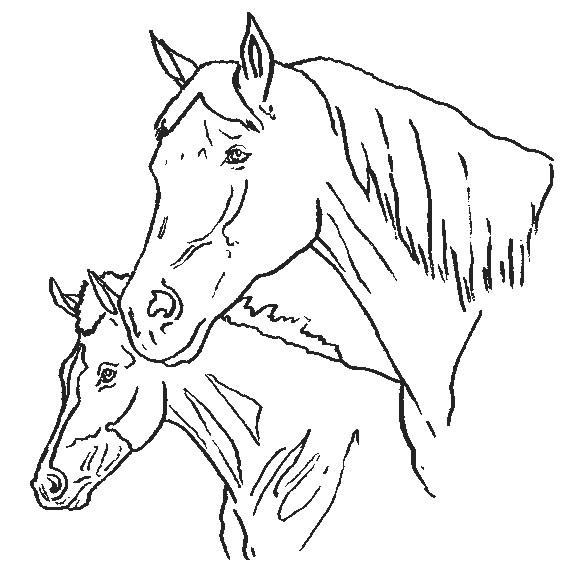 Coloriage et dessins gratuits Poulain et sa mère à imprimer
