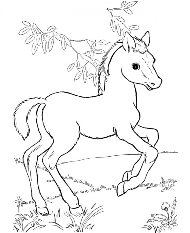 Coloriage poulain magnifique dessin gratuit imprimer - Coloriage poulain ...