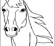 Coloriage Tête de cheval Merens