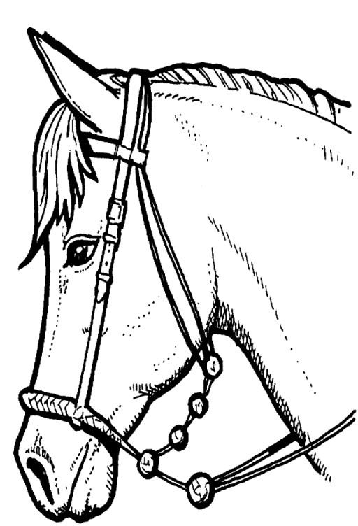 Coloriage t te de cheval noir et blanc dessin gratuit imprimer - Tete de cheval a imprimer ...