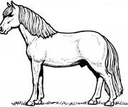 Coloriage et dessins gratuit Un Cheval à imprimer