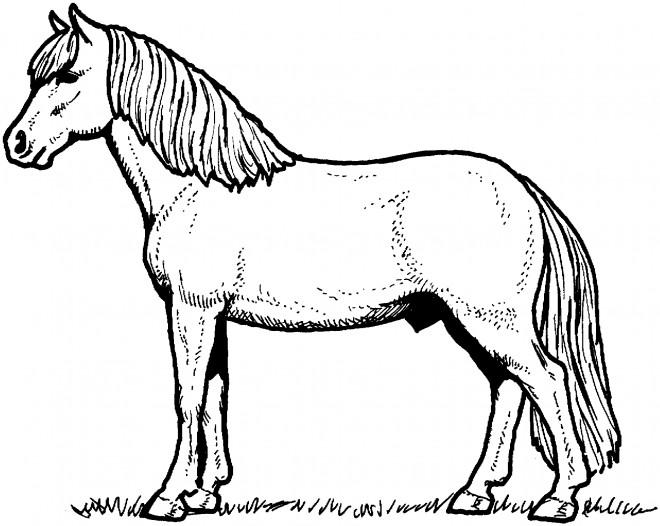 Coloriage et dessins gratuits Un Cheval à imprimer