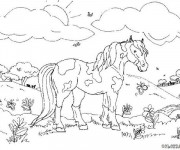 Coloriage Un cheval multicolore