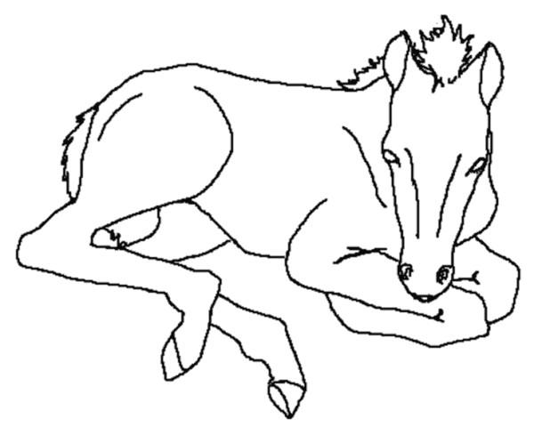 Coloriage et dessins gratuits Un poulain à imprimer