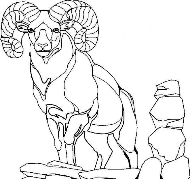 Coloriage et dessins gratuits Chèvre adulte sur les rochers à imprimer