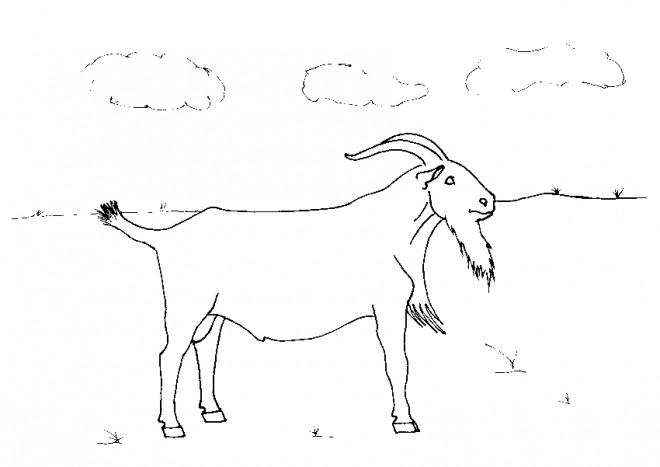 Coloriage et dessins gratuits Chèvre dans la plaine à imprimer