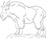 Coloriage Chèvre de montagne pour enfant