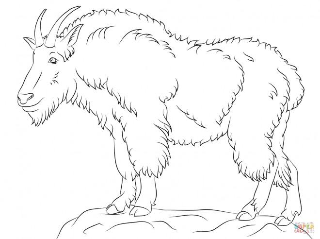 Coloriage et dessins gratuits Chèvre de montagne pour enfant à imprimer
