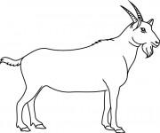 Coloriage et dessins gratuit Chèvre en couleur à imprimer