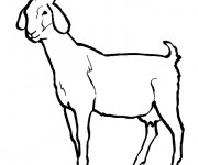 Coloriage et dessins gratuit Chèvre en noir et blanc à imprimer