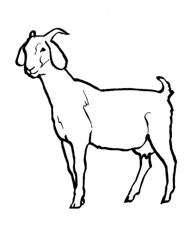 Coloriage et dessins gratuits Chèvre en noir et blanc à imprimer