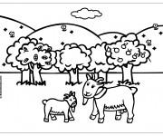 Coloriage ch vre et chevreau dessin gratuit imprimer - Dessin chevreau ...