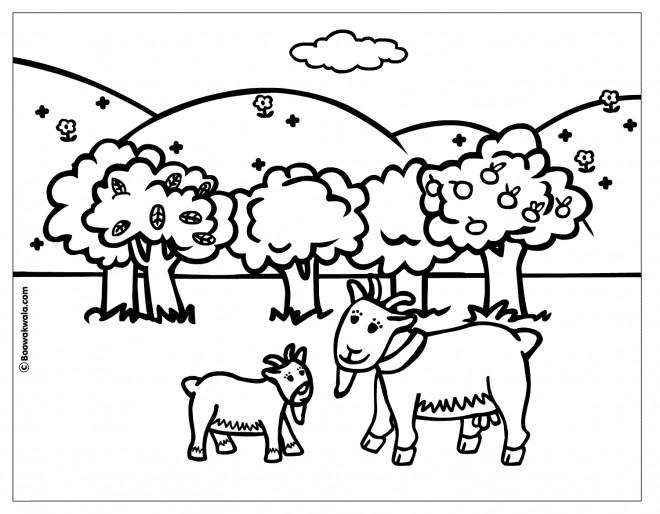 Coloriage et dessins gratuits Chèvre et chevreau à imprimer