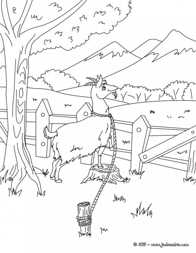 Coloriage et dessins gratuits Chèvre et compagne à imprimer