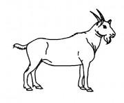 Coloriage Chèvre l'animal domestique