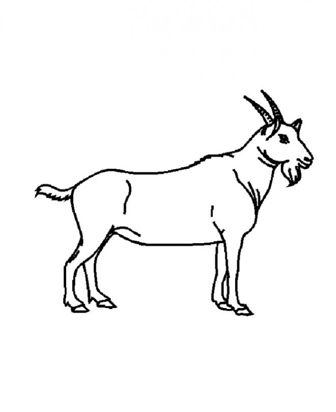 Coloriage Chèvre Lanimal Domestique Dessin Gratuit à Imprimer