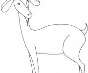 Coloriage et dessins gratuit Chèvre pour enfant à imprimer