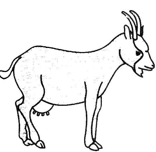 Coloriage et dessins gratuits Chèvre simple à imprimer
