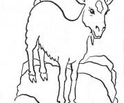 Coloriage et dessins gratuit Chèvre sur un rocher à imprimer