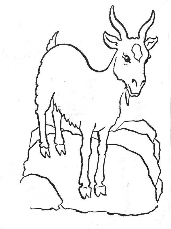 Coloriage ch vre sur un rocher dessin gratuit imprimer - Dessin chevreau ...