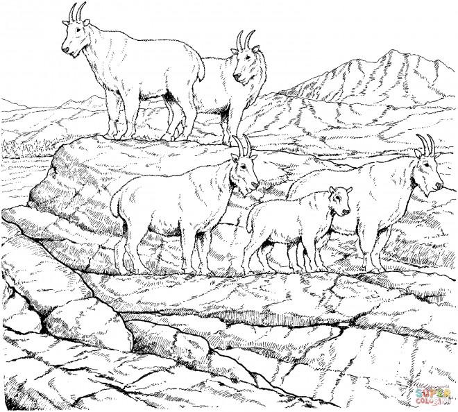 Coloriage et dessins gratuits Chèvres de montagne à imprimer
