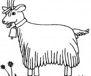 Coloriage et dessins gratuit La Chèvre Poitevine à imprimer