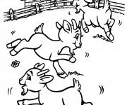 Coloriage et dessins gratuit Les chevreaux jouent à imprimer