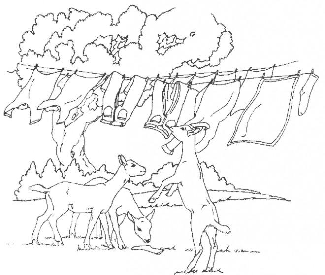 Coloriage et dessins gratuits Les Chèvres de la ferme à imprimer