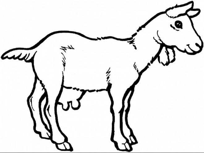 Coloriage et dessins gratuits Petite Chèvre couleur à imprimer