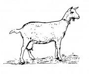Coloriage et dessins gratuit Une Chèvre en maternelle à imprimer