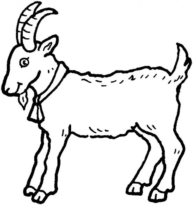Coloriage et dessins gratuits Une petite Chèvre à imprimer