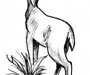 Coloriage dessin  Chevreuil 12