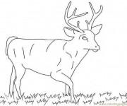 Coloriage dessin  Chevreuil 14