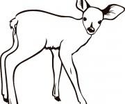 Coloriage dessin  Chevreuil 17